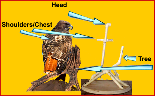 red-tail armature back titles copy