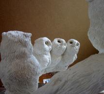 Screech Owls 7 11 4